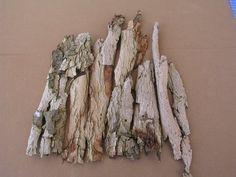 Corteza de alcornoque (corcho)