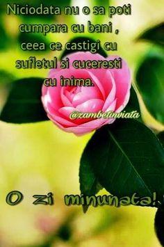 Spiritual Quotes, Spirituality, Love, Flowers, Plants, Spirit Quotes, Amor, Spirituality Quotes, Spiritual