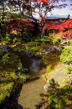 Hougonin Temple, Kyoto, Japan  Oh my goodness I'd love to have this kind of garden.. this is definitely on my wishlist!!
