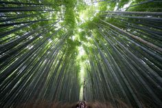 Daily Dozen for Sept. 22, 2016 — Photos -- National Geographic Your Shot