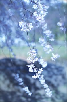flowers, blue, and nature image Light Blue Aesthetic, Blue Aesthetic Pastel, Flower Aesthetic, Flower Wallpaper, Nature Wallpaper, Wallpaper Backgrounds, Blue Wallpapers, Pretty Wallpapers, Aesthetic Backgrounds