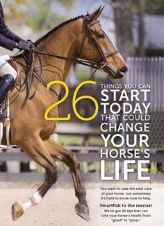 26 Things You Can Start Today That Could Change Your Horse's Life
