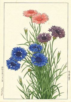Nishimura Hodo 'Cornflower' 1939