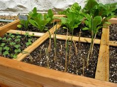Square-foot gardening: This simple method of organizing crops works best in a raised bed and will maximize the surface area of your garden to produce large yields of crops. It entails dividing the soil area into 1-square-foot cells, using twine, wood or wire affixed in a grid format to the top of the raised bed.