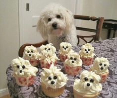 Cupcakes and dog ;) via http://newsmix.me