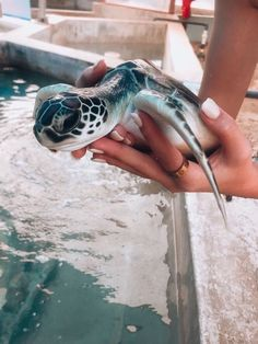 You bought the turtle so you can have more fun with family members and friends. Baby Animals Pictures, Cute Animal Photos, Animals And Pets, Cute Pictures, Baby Farm Animals, Wild Animals, Cute Creatures, Beautiful Creatures, Animals Beautiful