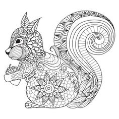 Hand drawn squirrel for coloring book,tattoo,t shirt design,logo