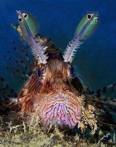 SWV Sept 2006 | Common Lionfish = Pterois volitans More info… | Flickr