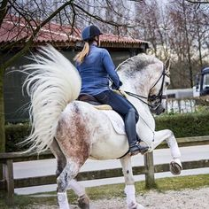 ♞Pinterest ➝ LimitlessSkyy♘ Horse Mane, Andalusian Horse, Dressage Horses, Horse World, Horse Pictures, Horse Breeds, Wild Horses, Horseback Riding, Horse Riding