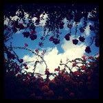 Instagram photos for tag #puertodemogan   Statigram