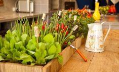 Ter Horta em Casa passou a ser interessante por poder cultivar alimentos em casa e até mesmo para ter uma pequena plantação para cuidar. Saiba mais
