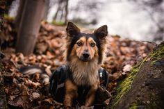 Little explorer posing in the leaves.