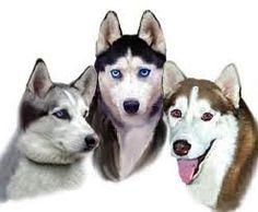Luna, Noctis, and pack member
