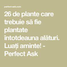 26 de plante care trebuie să fie plantate întotdeauna alături. Luați aminte! - Perfect Ask Wisteria, Health Fitness, Landscape, Gardening, House, Decor, Gardens, Plants, Permaculture