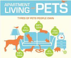 Pinteresting Pets |