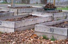 Raised Bed Gardening - raised beds, intensively gardened