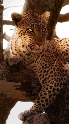 Zoo Pictures, Lion King Pictures, Lion Images, Jaguar Animal, Cheetah Animal, Animal Jokes, Funny Animal Videos, Cute Wild Animals, Funny Animals