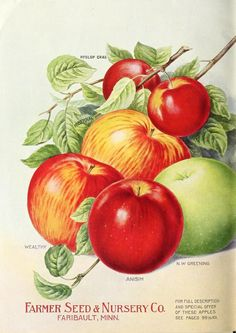 Farmer Seed & Nursery Co - Season 1916 [catalog]