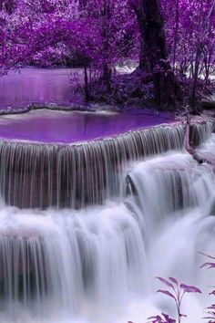 Purple Scenery