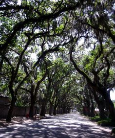 Tree covered road. St Augustine Fl