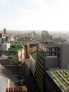 Urban Agriculture—Roof Gardens