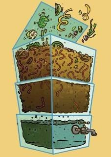 Composting with worms Composting 101, Composting Toilet, Bokashi, Garden Compost, Vegetable Garden Design, Urban Farming, Green Life, Raised Garden Beds, Hydroponics