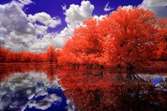 Red Leaves Reflection