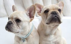 Two peas in a pod! We love that collar, we know who the queen of that castle is!