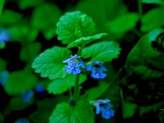 Backyard Medicinal Plants: Do You Have Herbal Remedies Right Under Your Nose?