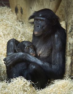 Mother and child by Theresa Elvin, via Flickr