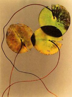 water plants  (photogram  - adam fuss)