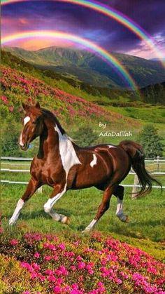Beautiful Horse Pictures, Most Beautiful Horses, Nature Pictures, Animal Pictures, Cute Horses, Pretty Horses, Horse Love, Beautiful Creatures, Animals Beautiful