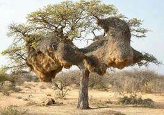 Amazing birds nest!!!