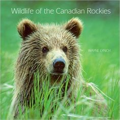 Wildlife of the Canadian Rockies by Wayne Lynch: Physical Geography, Canadian Rockies, Brown Bear, Lynch, Girl Scouts, Geology, Social Studies, Literature, Wildlife