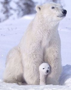 Polar bear and her cub.