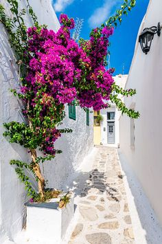 Tinos Island, Greece Greece, Sidewalk, Island, Beautiful, Pictures, Greece Country, Side Walkway, Walkway, Islands