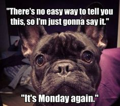 Nooooooooo!  #dogs  #monday  #funnypics