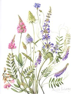By Michele Delsaute. Very pretty. By Michele Delsaute. Very pretty. Vintage Botanical Prints, Botanical Drawings, Botanical Flowers, Botanical Art, Watercolor Flowers, Watercolor Art, Illustration Botanique, Arte Floral, Floral Illustrations