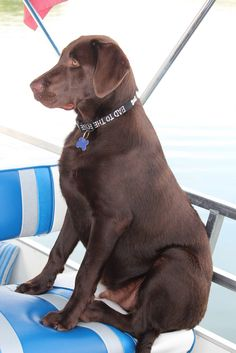 Remington Gunner Osborn.  His first ride in a boat.  6 months old - 85 pounds.