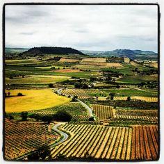 Carreteras entre #viñedos, #Rioja,