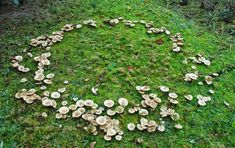 Wicca, Fae Aesthetic, Spring Aesthetic, Fantasy Magic, The Ancient Magus Bride, Fairy Ring, Faeries, Fairy Tales, Stuffed Mushrooms