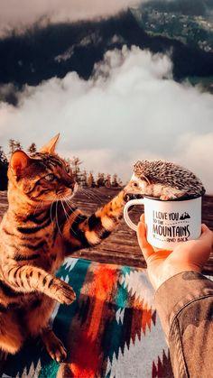 Cute Cat Wallpaper, Winter Wallpaper, Animal Wallpaper, Christmas Phone Wallpaper, Halloween Wallpaper Iphone, Nature Animals, Animals And Pets, Tier Fotos, Jolie Photo
