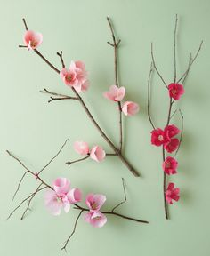 Cherry Blossom Branch Cherry Blossom Branch Floral designer Livia Cetti author of The Exquisite Book of Paper Flowers shares how to make a charming branch of paper cherry blossoms. The post Cherry Blossom Branch appeared first on Paper Ideas. Crepe Paper Flowers, Fabric Flowers, Tissue Flowers, Flower Paper, Balloon Flowers, Flower Crafts, Diy Flowers, Bright Flowers, Fake Flowers