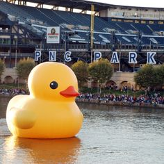 Welcome to #Buctober! Let's go Bucs! #QuackPGH #PghDuck #Pirates #PNCPark #Pittsburgh