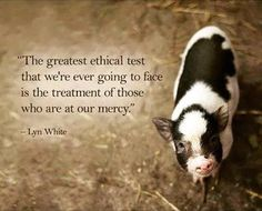 The greatest ethical test that we're going to face is the treatment of those who are at our mercy #vegan