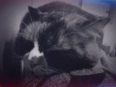 Aisha cat