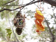 Homemade bird feeders - might be a good science experiment - see which birds like which bird feeders best.