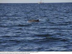 La organización de conservación marina Oceana ha culpado directamente a Dinamarca de bloquear la protección de 69 especies marinas en el Báltico, tales como la anguila, la marsopa o el éider común, que se encuentran entre las especies en peligro de extinción a las que se ha denegado la protección.