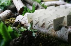 birch escort card holder