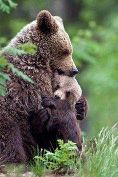 Mom, let's cuddle!  #HappyAlert via @Happy Hippo Billy